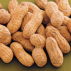 In-shell Peanuts Jumbo Roasted Raw
